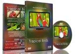 Tropische vogels met muziek of natuurgeluiden