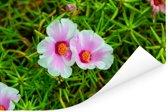 IJskruid dat groeit in een tuin van Florida Poster 180x120 cm - Foto print op Poster (wanddecoratie woonkamer / slaapkamer) XXL / Groot formaat!