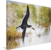 Zwarte Schuimspaan tijdens de vlucht tegen een achtergrond van water en gras Canvas 80x60 cm - Foto print op Canvas schilderij (Wanddecoratie woonkamer / slaapkamer)