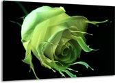 Canvas schilderij Roos | Groen, Zwart, | 140x90cm 1Luik