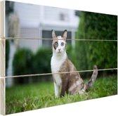Siamese kat Hout 30x20 cm - Foto print op Hout (Wanddecoratie)
