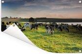 Grote groep Friese koeien grazen in een groen weiland Tuinposter 90x60 cm - Tuindoek / Buitencanvas / Schilderijen voor buiten (tuin decoratie)