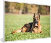Foto in lijst - Duitse herdershond ligt op het gras fotolijst wit 60x40 cm - Poster in lijst (Wanddecoratie woonkamer / slaapkamer)