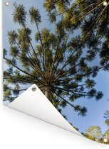 Stekelige takken van de parana pine Tuinposter 60x80 cm - Tuindoek / Buitencanvas / Schilderijen voor buiten (tuin decoratie)