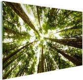 Hoge groene bomen in jungle Glas 90x60 cm - Foto print op Glas (Plexiglas wanddecoratie)