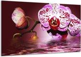 Canvas schilderij Orchidee   Paars, Roze, Rood   120x70cm 1Luik