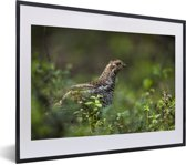Foto in lijst - Hazelhoen in het bos fotolijst zwart met witte passe-partout klein 40x30 cm - Poster in lijst (Wanddecoratie woonkamer / slaapkamer)