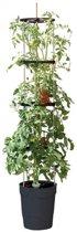 Tomatentoren 150 cm met bewateringssysteem - grijs