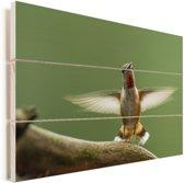 Een calliope kolibrie op een tak Vurenhout met planken 90x60 cm - Foto print op Hout (Wanddecoratie)