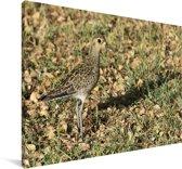 Goudplevier in de zon Canvas 120x80 cm - Foto print op Canvas schilderij (Wanddecoratie woonkamer / slaapkamer)