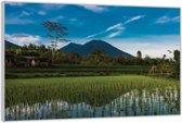 Plexiglas –Aziatisch Rijstveld– 120x80cm (Wanddecoratie van Plexiglas)
