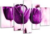 Glasschilderij Tulp | Paars, Wit, Zwart | 170x100cm 5Luik | Foto print op Glas |  F003890