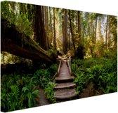 Trap van gevallen bomen in jungle Canvas 120x80 cm - Foto print op Canvas schilderij (Wanddecoratie)
