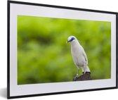 Foto in lijst - Een Balispreeuw op een groene achtergrond fotolijst zwart met witte passe-partout 60x40 cm - Poster in lijst (Wanddecoratie woonkamer / slaapkamer)