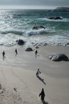 Alive! little penguin friends - Natural and shiny - Photo Art Notebooks (6 x 9 series)