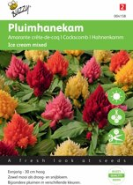 Buzzy Seeds - Pluimhanekam Ice Cream mixed (Celosia Plumosa)