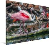 Rode ibis op een drijvende tak in het water Canvas 30x20 cm - klein - Foto print op Canvas schilderij (Wanddecoratie woonkamer / slaapkamer)
