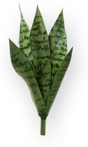 Maxifleur - Sanseveria Boeket 40 cm groen