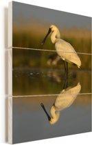Reflectie van een lepelaar in het kalme water Vurenhout met planken 60x90 cm - Foto print op Hout (Wanddecoratie)