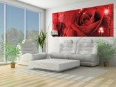 Fotobehang Roos, Bloemen | Rood | 250x104cm