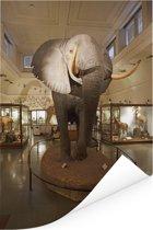 Grote olifant in het Natural History Museum in Londen Poster 80x120 cm - Foto print op Poster (wanddecoratie woonkamer / slaapkamer)