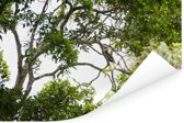 Bossen in het Nationaal park Manusela op het eiland Ceram Poster 90x60 cm - Foto print op Poster (wanddecoratie woonkamer / slaapkamer)
