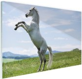 Wit paard steigert Glas 60x40 cm - Foto print op Glas (Plexiglas wanddecoratie)