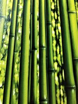 BAMBOE BEHANG - AS Creation Simply Decor