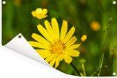 Een gele morgenster Tuinposter 90x60 cm - Tuindoek / Buitencanvas / Schilderijen voor buiten (tuin decoratie)