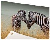 Zebras  Tuinposter 200x100 cm - Tuindoek / Buitencanvas / Schilderijen voor buiten (tuin decoratie) XXL / Groot formaat!