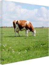 Bruin-witte koe in de wei Canvas 100x100 cm - Foto print op Canvas schilderij (Wanddecoratie woonkamer / slaapkamer) / Dieren Canvas Schilderij