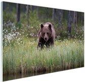Bruine beer fotoafdruk Glas 90x60 cm - Foto print op Glas (Plexiglas wanddecoratie)