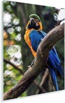 Blauwkeelara in de dierentuin van het Braziliaanse Porto Alegre Plexiglas 120x180 cm - Foto print op Glas (Plexiglas wanddecoratie) XXL / Groot formaat!