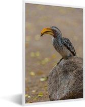 Foto in lijst - Een Zuidelijke geelsnaveltok zit op een rots fotolijst wit 40x60 cm - Poster in lijst (Wanddecoratie woonkamer / slaapkamer)