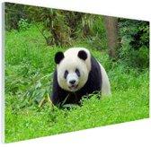 Grote panda in het gras Glas 180x120 cm - Foto print op Glas (Plexiglas wanddecoratie) XXL / Groot formaat!