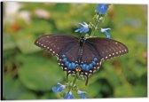 Dibond – Zwarte Vlinder– 90x60 Foto op Aluminium (Wanddecoratie van metaal)
