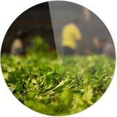 THEEPLANTAGE | Wanddecoratie | Ronde Plexiglas | 100CM x 100CM | Schilderij | Foto op plexiglas