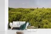 Fotobehang vinyl - Duinen en pijnbomen in het Spaanse Nationaal park Doñana breedte 390 cm x hoogte 260 cm - Foto print op behang (in 7 formaten beschikbaar)