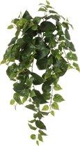 Emerald - Philio Hangplant - 70 cm - Groen