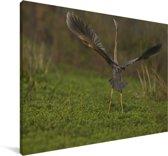 Purperreiger met gestrekte vleugels Canvas 30x20 cm - klein - Foto print op Canvas schilderij (Wanddecoratie woonkamer / slaapkamer)