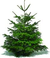 Nordmann Excellent Echte Kerstboom 175-200 cm - Easyfix Boorgat