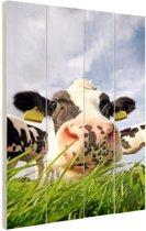Nieuwsgierige koe Hout 120x160 cm - Foto print op Hout (Wanddecoratie) XXL / Groot formaat!