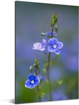 Paarse bloemen van de lange ereprijs met een wazige achtergrond Aluminium 40x60 cm - Foto print op Aluminium (metaal wanddecoratie)