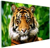 Sumatraanse tijger jungle Glas 120x80 cm - Foto print op Glas (Plexiglas wanddecoratie)