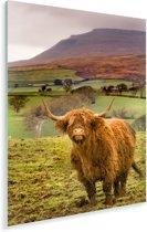 Schotse hooglander in een kleurrijke omgeving Plexiglas 120x180 cm - Foto print op Glas (Plexiglas wanddecoratie) XXL / Groot formaat!