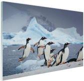 Pinguins springen uit het water Glas 120x80 cm - Foto print op Glas (Plexiglas wanddecoratie)