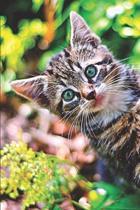 Kitten Lovers Journal