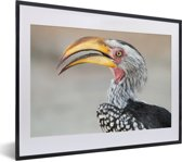 Foto in lijst - Een portret van een Zuidelijke geelsnaveltok fotolijst zwart met witte passe-partout klein 40x30 cm - Poster in lijst (Wanddecoratie woonkamer / slaapkamer)