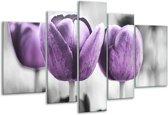 Glasschilderij Tulpen   Paars, Grijs, Wit   170x100cm 5Luik   Foto print op Glas    F002792
