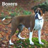 Boxers Kalender 2020